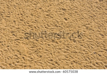 Background - the sand with traces of birds . - stock photo
