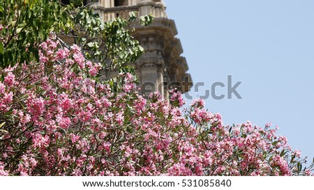 Background view of a pink oleander tree with a building and some copy space