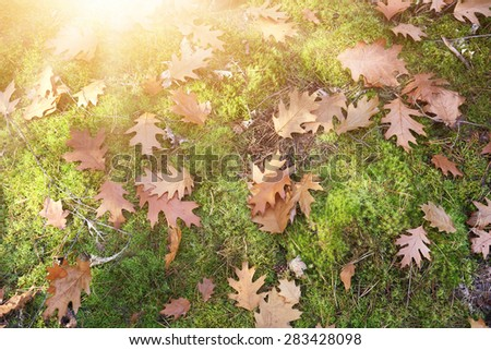 background with autumn leaves on moss