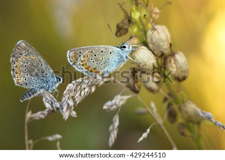 background with colorful butterfly