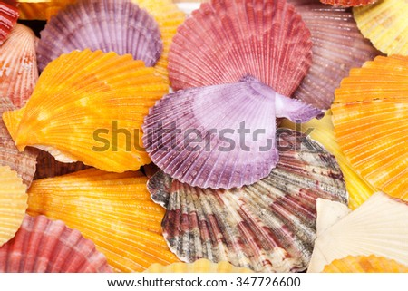 background with colorful sea shells of mollusks, close up.