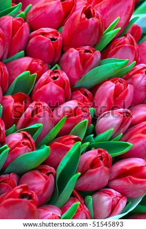 background with colorfull buch of tulip flowers