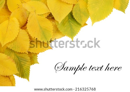 Background with elm leaves isolated on white - stock photo