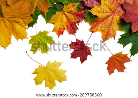 Background with falling maple leaves