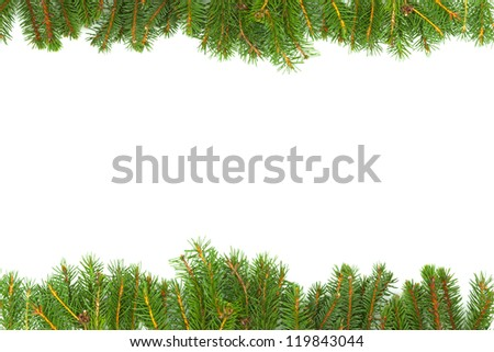 Background with fir isolated on white background - stock photo