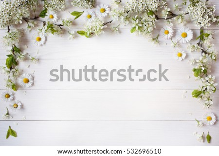 Background with flowering branches of plums, cherries and daisies
