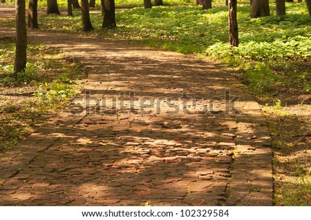 Background with forest path - stock photo