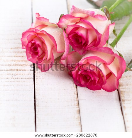 Background with fresh flowers roses in ray of light and empty place  for your text. Roses on white wooden table. Selective focus is on left rose. Square image. - stock photo