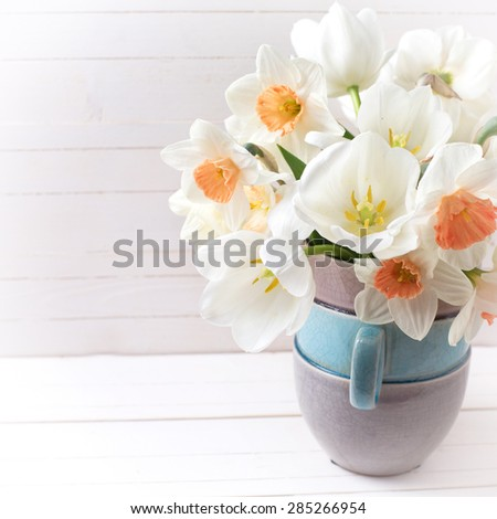 Background with fresh spring  pink daffodils  and white tulips flowers in vase  on white wooden planks. Selective focus. Place for text. Square image. - stock photo