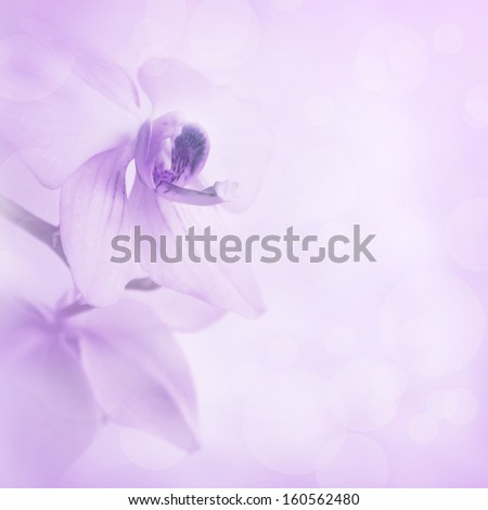 Background with orchid flowers - stock photo