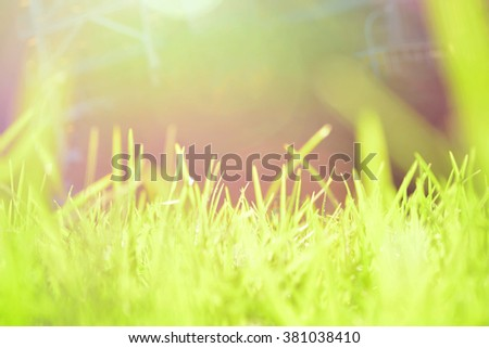 Extreme Close-up Of A Meadow Grass Stems On A Summer Morning With ...