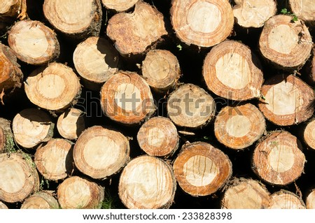background with pattern of tree logs texture