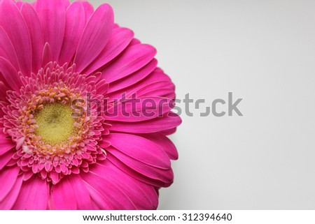 Background with pink gerber and with a free place for your text. It can be used as a background for postcard or invitation cards. - stock photo