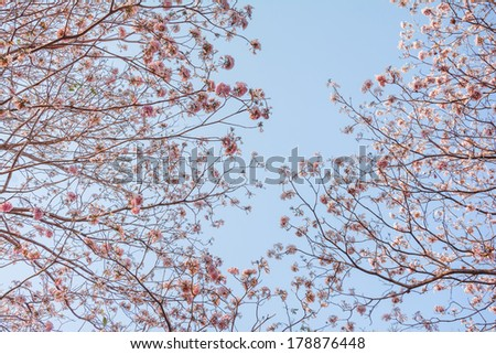 Background with pink spring blossoms. - stock photo