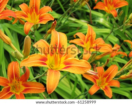 Background with set of lilies - stock photo