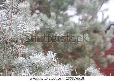 background with snow-covered fir tree branches - stock photo