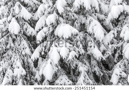 Background with snowy fir trees - stock photo