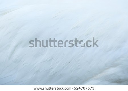 Background with the image of bird feather