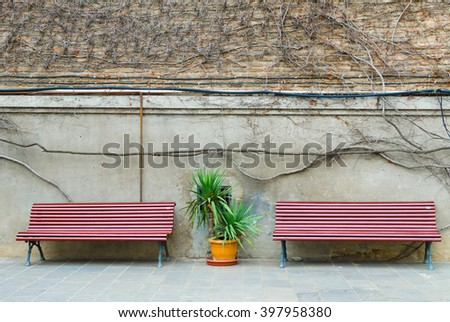 background with two benches, between which the plant, in the background a brick wall with the spring loach