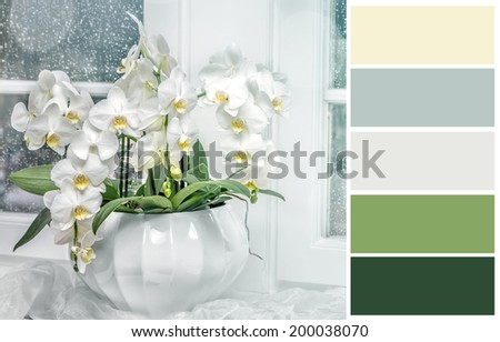 Background with white orchid   with complimentary swatches. - stock photo
