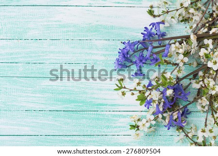 Background with white spring flowering branches of trees  and blue flowers on turquoise painted wooden planks. Selective focus. Place for text.  - stock photo