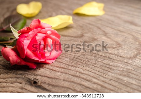 Background with yellow and red rose petals on the wooden table.Place for text,horizontal photo - stock photo