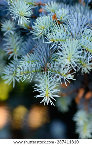 Backgrounds and textures: blue fir tree branch, dark background with blurred bright festive lights - stock photo