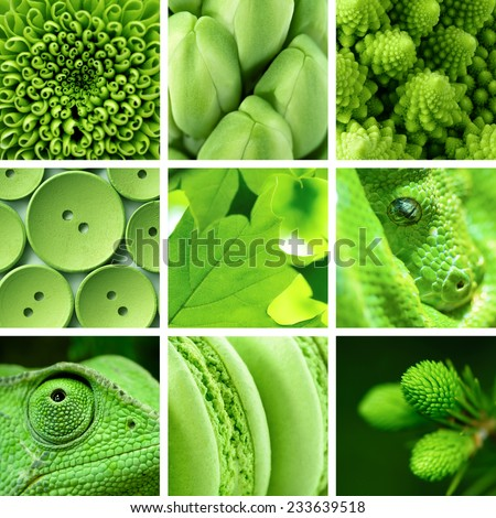 Backgrounds and textures: composite image, collage of green color objects - stock photo