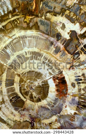 Backgrounds and textures: petrified wood, surface of beautiful decorative stone, abstract pattern of cracks, spots and stains, natural background - stock photo