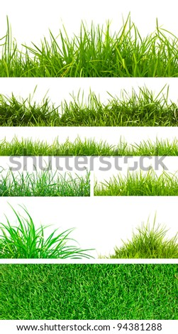 Backgrounds of fresh spring green grass Isolated On White - stock photo