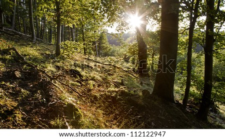 backlight in wood