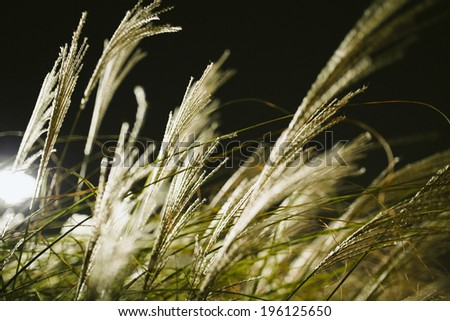 Backlit Blowing Grass at Night With Shallow Depth of Field - stock photo