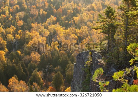 Backlit cliff with pines above aspen trees in Fall color on Oberg Mountain in northern Minnesota - stock photo