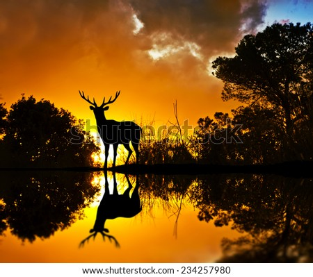 backlit deer among the trees - stock photo