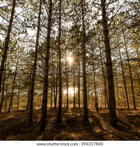 Backlit forest - stock photo