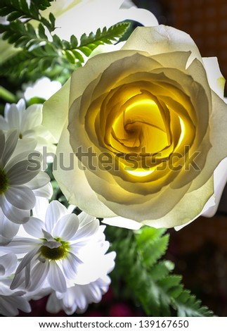 Backlit glowing white rose and daisies - stock photo