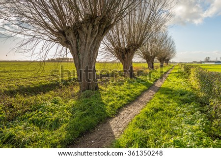 Backlit image of a rural landscape in the fall season with a small sandy path and a row of leafless pollard willow trees. - stock photo