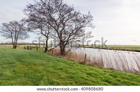 Backlit image of bare trees with strangely shaped branches on the shore of a creek in a Dutch nature reserve at the end of the winter season. - stock photo