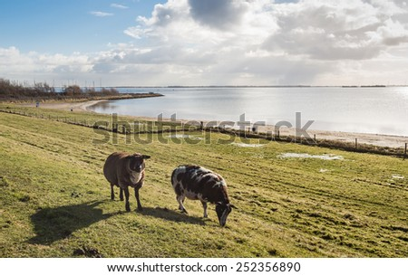 Backlit image of brown and white sheep in winter coat on the top of a a Dutch dike on a clear and sunny day. - stock photo