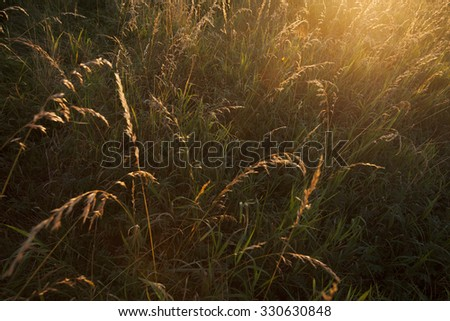 Backlit image of hay in the evening sunlight. Selective focus.  - stock photo