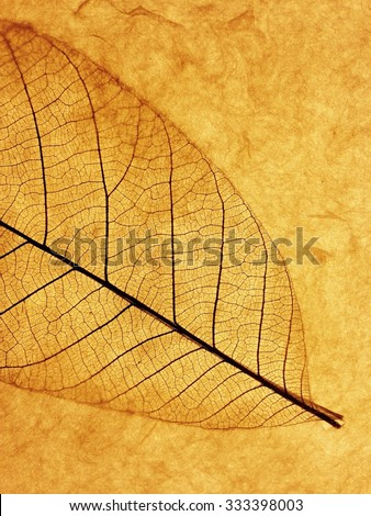 Backlit leaf artwork
