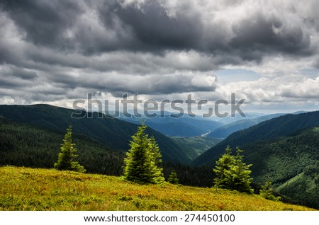 Backlit pine trees on the grass field on mountain slope with stormy sky - stock photo