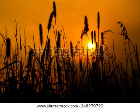 Backlit prairie image with a golden sky towards evening - stock photo