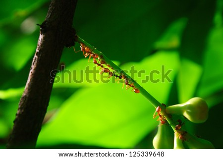 Backlit Red Ant on a stalk of leaves - stock photo