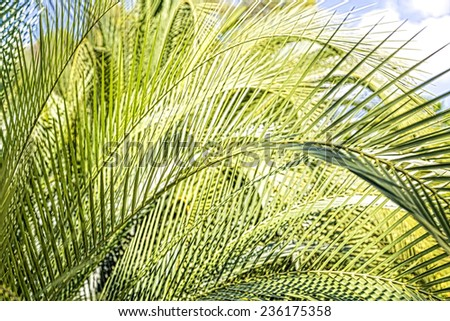 backlit shoot of some palm tree leaves with blue sky - stock photo