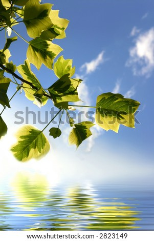 Backlit tree branch with water and reflections on waves