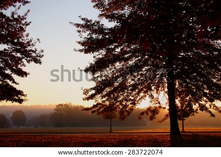 Backlit tree - early morning sunlight shines through and illuminates the autumn colors of an oak tree - stock photo