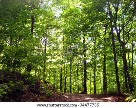 Backlit trees in the Parc du Mont-Royal in Montreal - stock photo