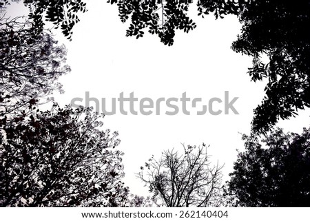 Backlit treetop Black like a picture frame - stock photo