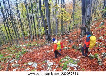 Backpackers descending in rare forest on fallen leaves during autumn - stock photo